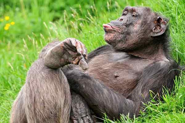 deixa-pra-la-monkey