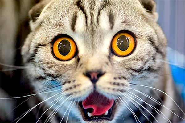 gato espantado